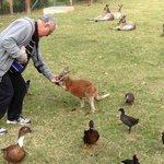 Feeding wallaby at Oakhill Farm