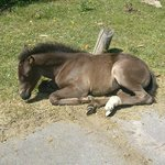 resting in the sun