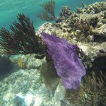 snorkeling at Sandy Bay