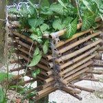 bamboo deco