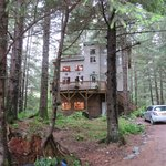 Treefort cabin