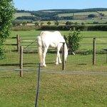 Lorraine's horse