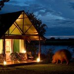Night-time visitor at Mvuu Camp