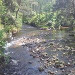 The burn (stream) near Aviemore