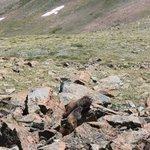 Una famiglia di marmotte vicino alla vetta