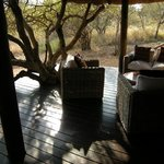 Our personal porch at Bush Lodge