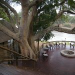 Large trees around decks at Enkoveni