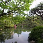 pond of the japanese garden 日本庭園の池