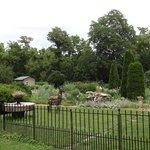 Lackawanna garden