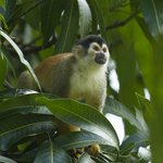 Squirrel monkey on grounds