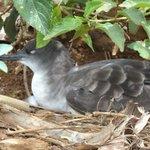 Momma bird sitting on eggs.