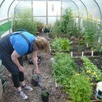 Working in the polytunnel