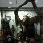 im a monkey :p