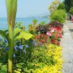 Flower displays along lake Geneva