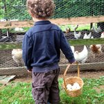 Collecting eggs at morning chores