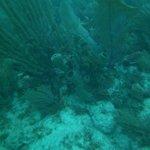 John Pennekamp Reef