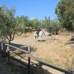 Sicily Horse Tours