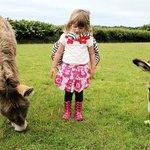 The friendly donkeys