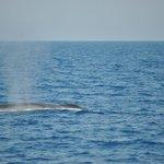la Balena!!!