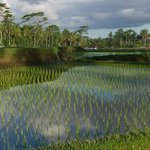 Bali Vitality Detox