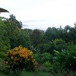 View Overlooking Rainforest