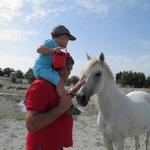 Rencontre avec les chevaux à l'étang devant les chambres