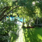 Ficus en el jardin