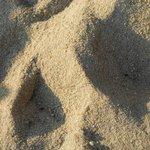 Sand at Mango beach bar