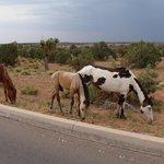 wild horses---everywhere