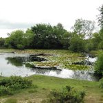 Hatchet Pond near Beaulieu