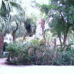 Foliage around the pool
