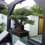 Nice Bonsai near entrance