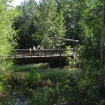 Bridge for viewing pond and fish