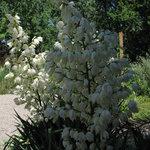 Flowers in the garden area