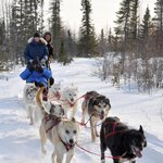 Dogsled coming!