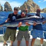 +200 lb Blue Marlin (Caught on Cinco De Mayo)