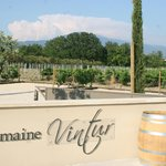 Mont Ventoux in the landscape at Winery
