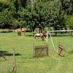 les animaux de la ferme tondent le terrain de foot :-)
