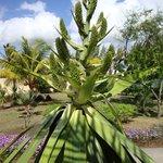 Rare flower from Jalsa garden