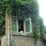 Fidel, il cane più fotografato di Bruges
