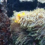 Local wildlife: clownfish