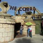 The Cobra Roller Coaster