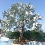 Beautiful Tree by Pool
