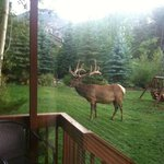 Elk stopping by to say good morning.