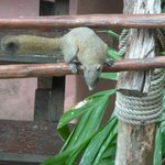 Un écureuil près du cottage