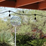Hummingbird perched on string of patio lights