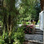 une partie du jardin : hortensias en fleur