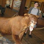 Bear inside the GAston Visitor center