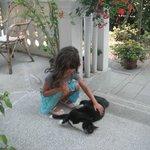 Hugo the Cat at Casa Villa Gardenia