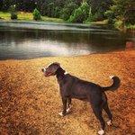 My dog loves Shelby Farms dog park!
